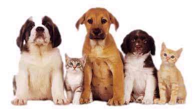 PetsLifeRx Dogs Cats Supplies